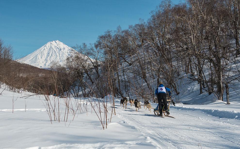 Гонка на собачьих упряжках на Камчатке
