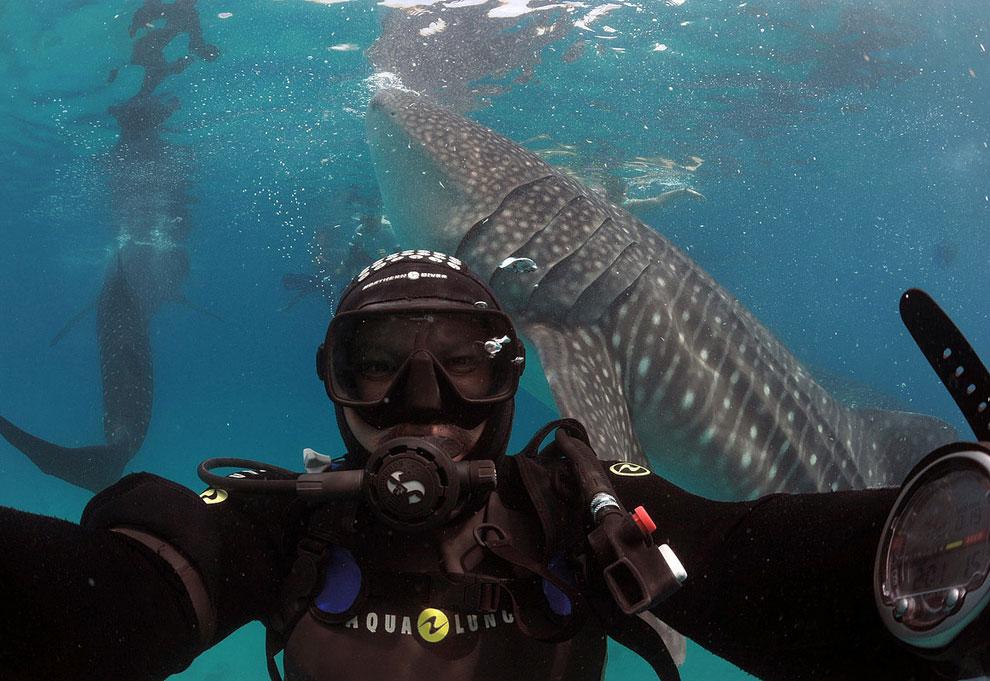 Исполнилась мечта фотографа и я снял свой автопортрет на фоне китовой акулы