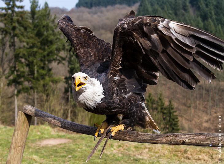 Тег: птица из Германии