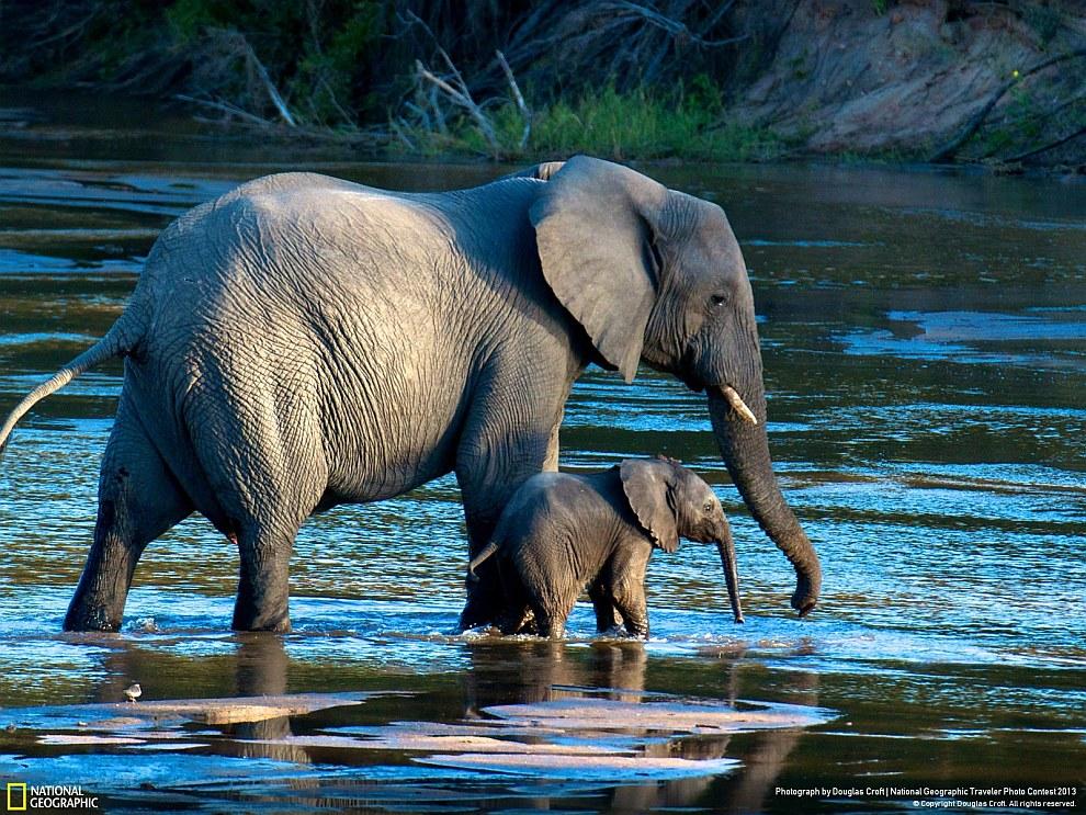 Слоны из заповедника в южной Африке