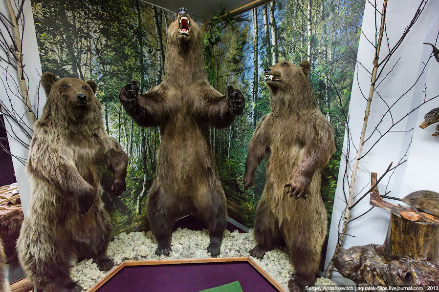 Музей Природы и Человека