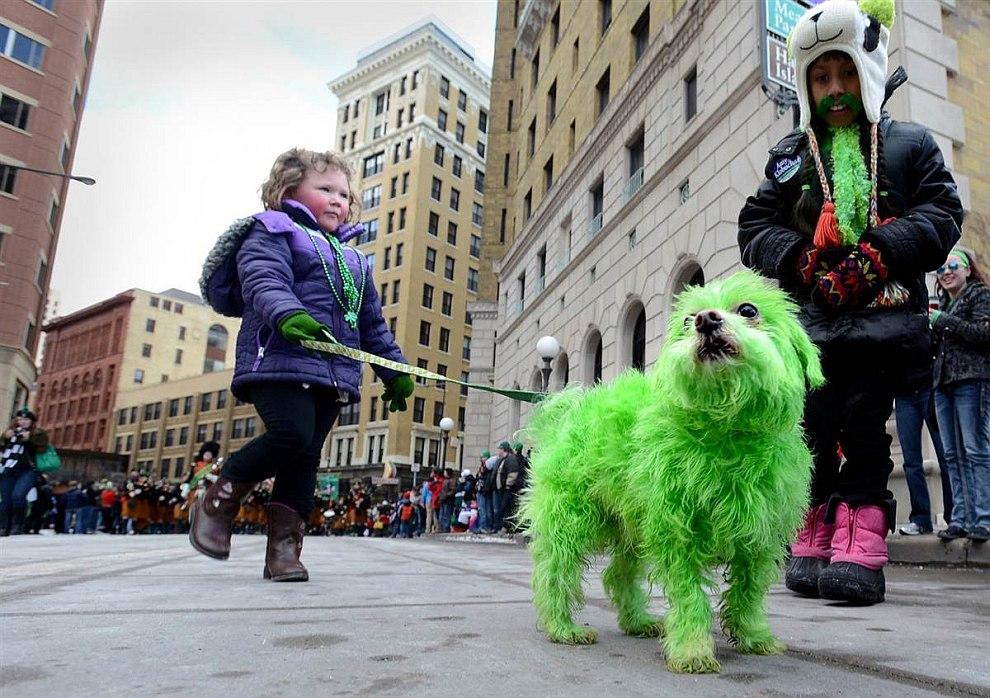 Зеленый пес