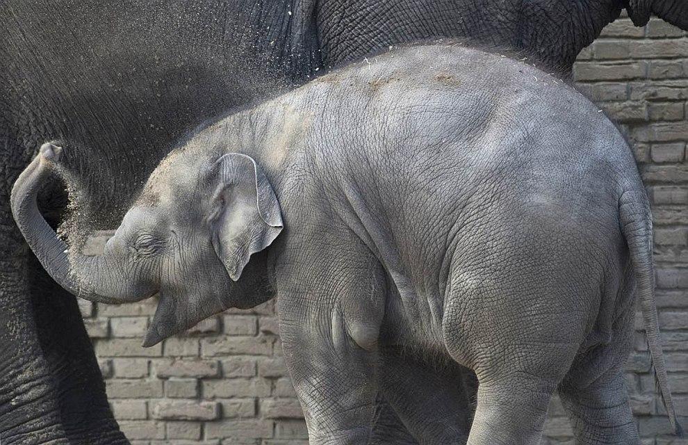 Семейство слонов в берлинском зоопарке