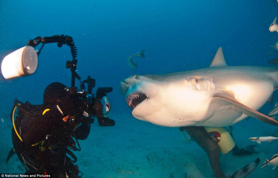 Лицом к «лицу» с акулой-быком