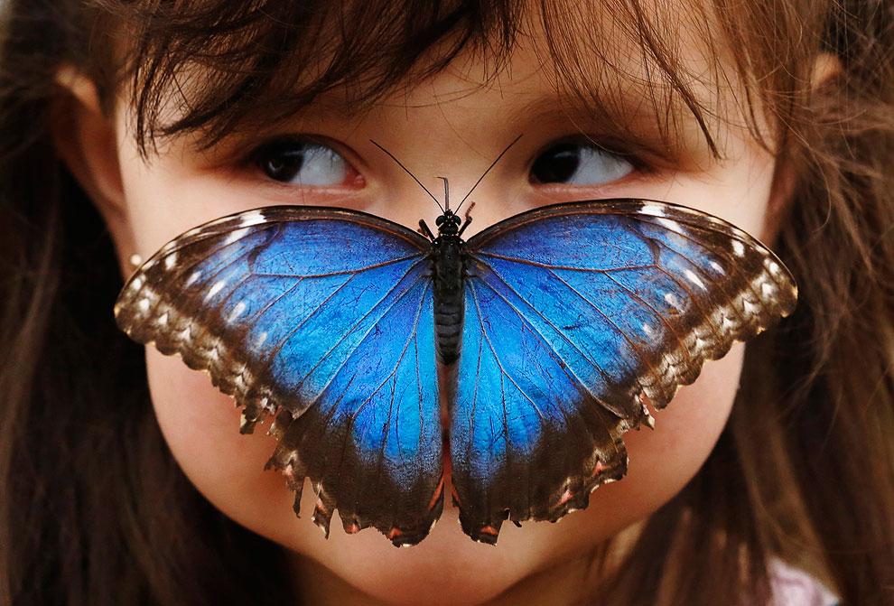 Выставка бабочек в Музее истории в Лондоне