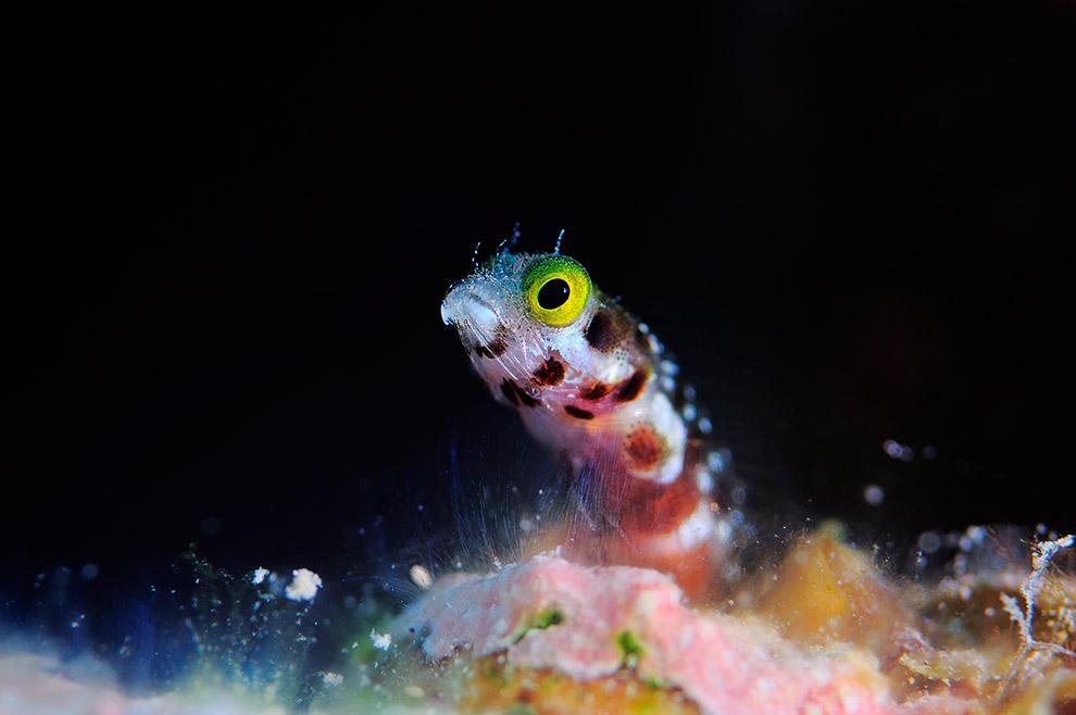 Собачки — это очень маленькие, но при этом очень потешные рыбки