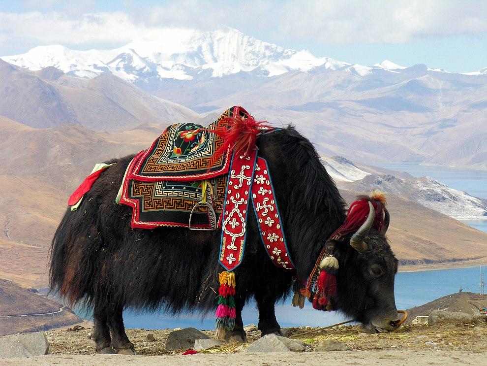 Як у озера Ямдрок, Тибет