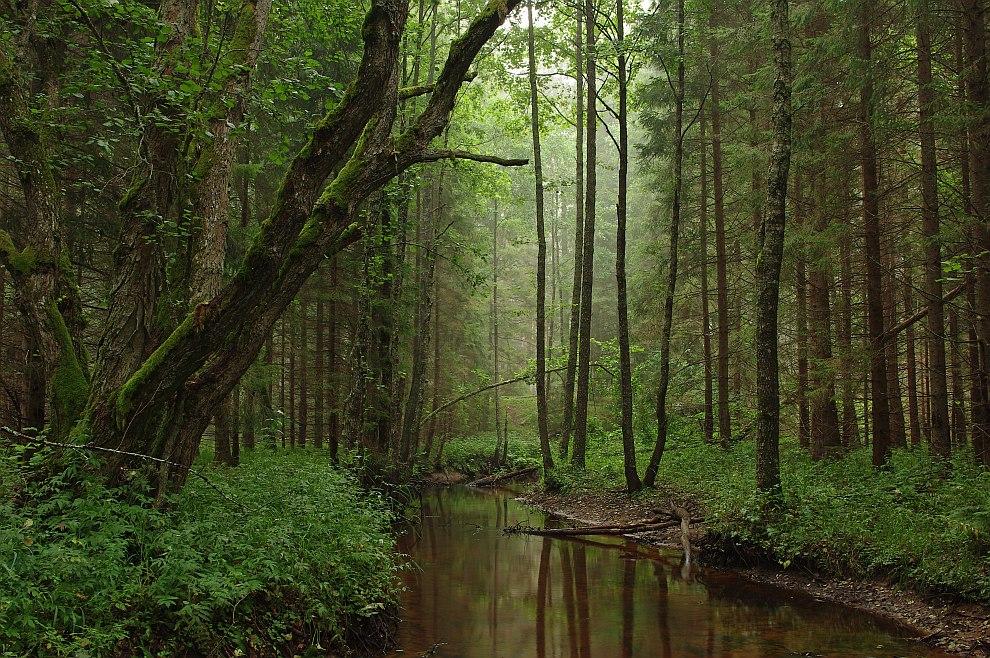 Природный парк в Эстонии