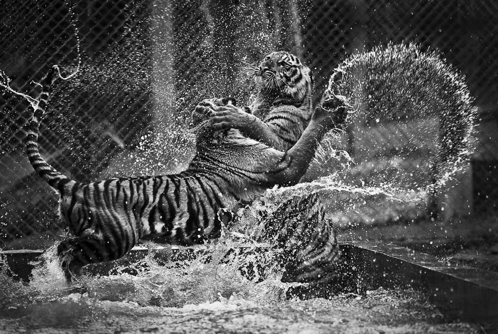 Игривые кошки в Храме Тигров в Бангкоке