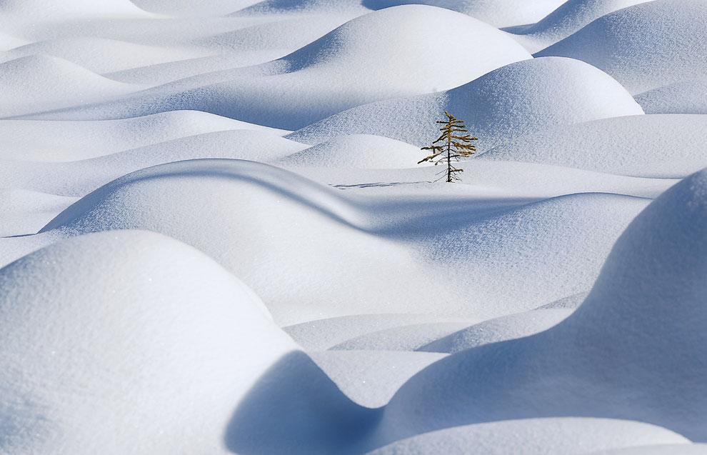 Одинокое дерево в снегу, Национальный парк Джаспер, провинция Альберта, Канада