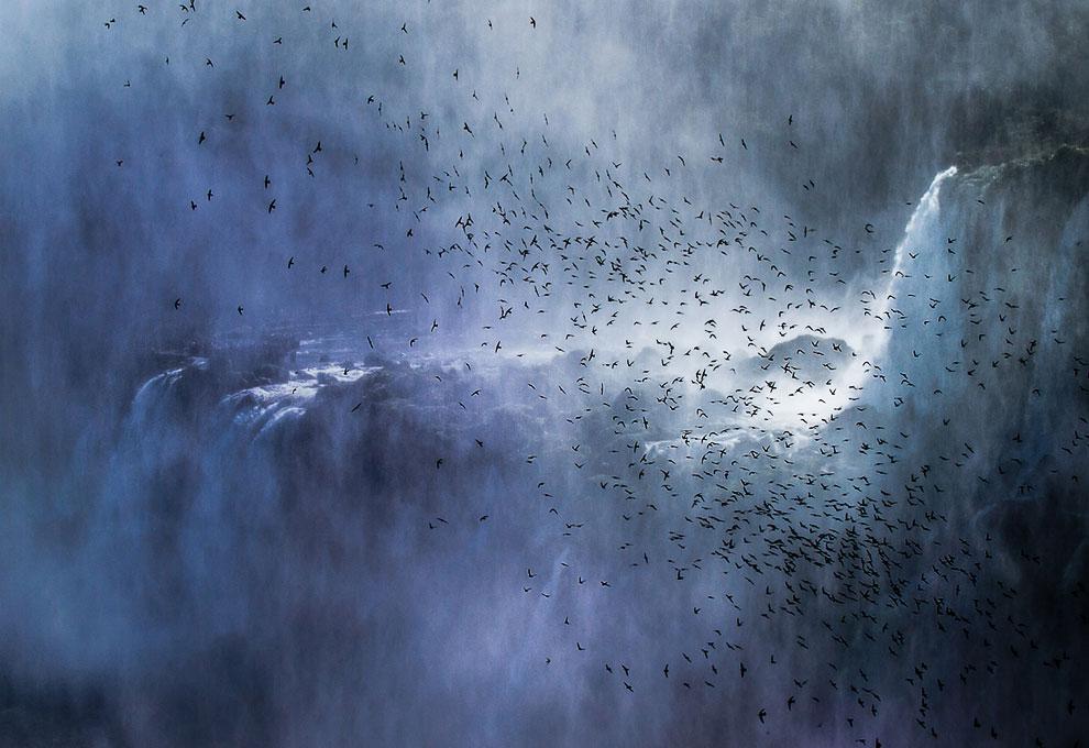 Эпическая картина: водопады Игуасу и стая стрижей