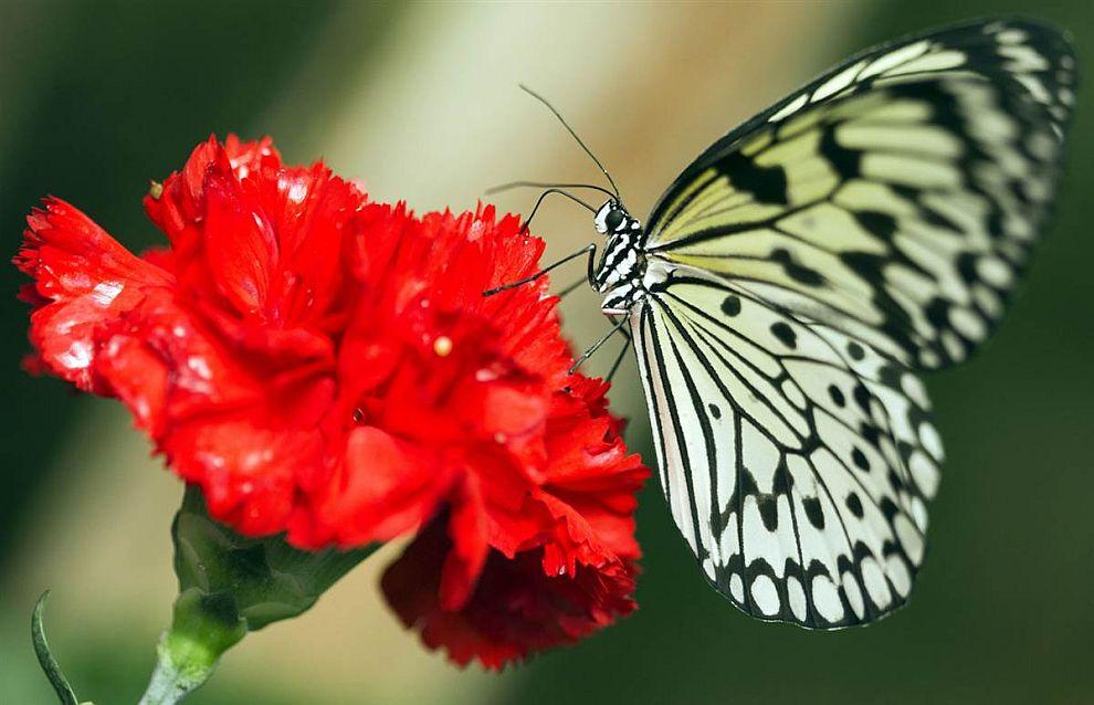 Парк бабочек в Германии