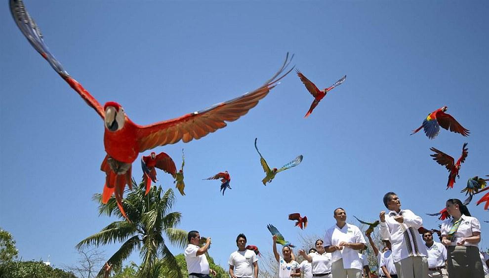 Парк Шкарет находится в Мексике и занесен в Книгу рекордов Гиннеса за то, что здесь за год родилось больше попугаев Ара, чем в любом другом парке на планете