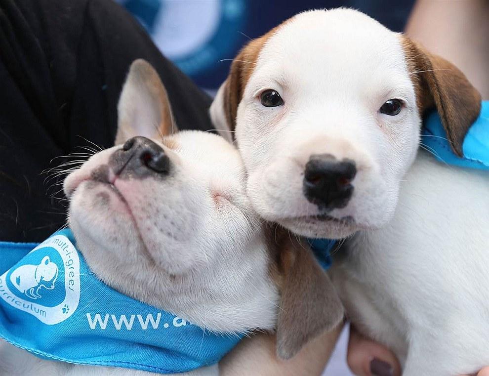 10 мая 2013 на Таймс-Сквер в Нью-Йорке прошла акция: люди могли взять к себе домой животных из приютов