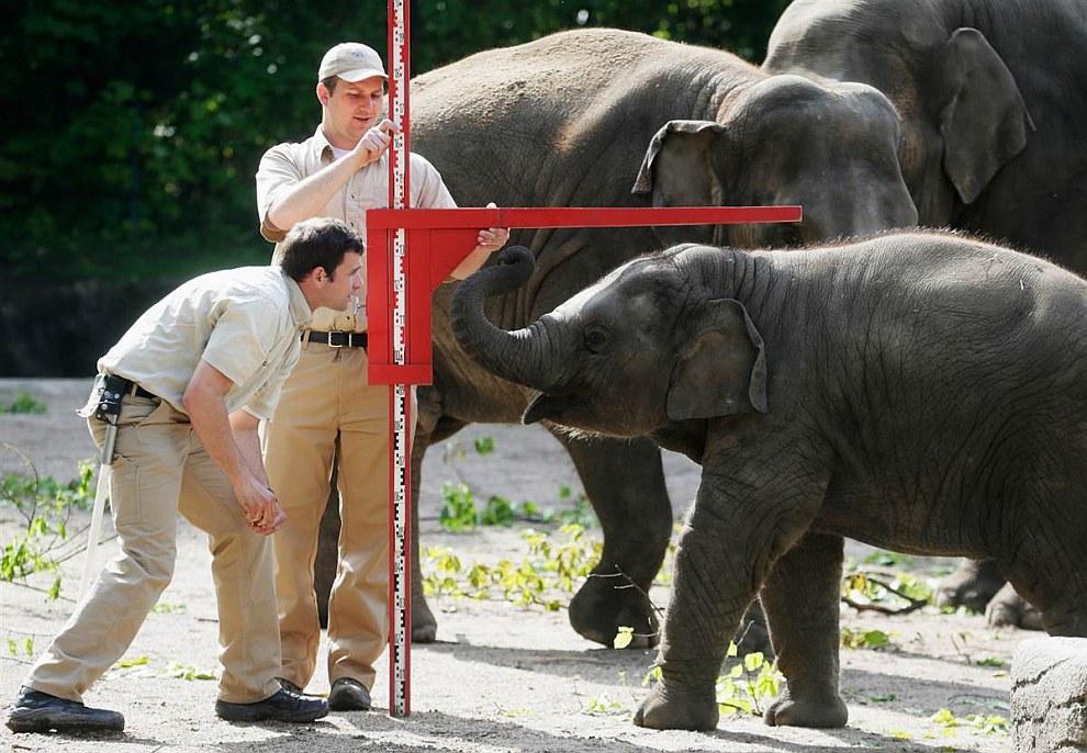 Измерение слонов