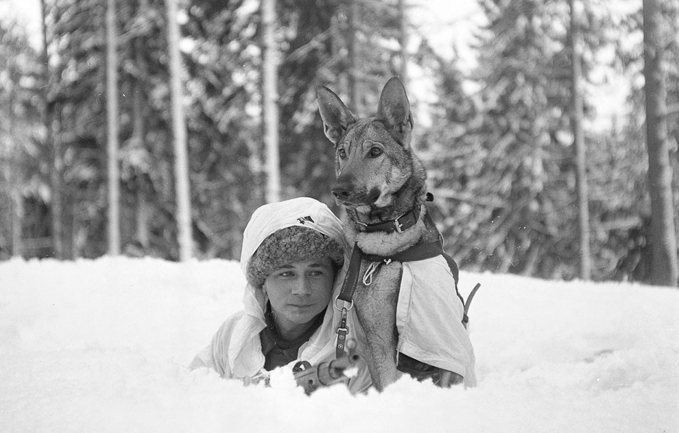 Военная школа собак Хямеенлинна