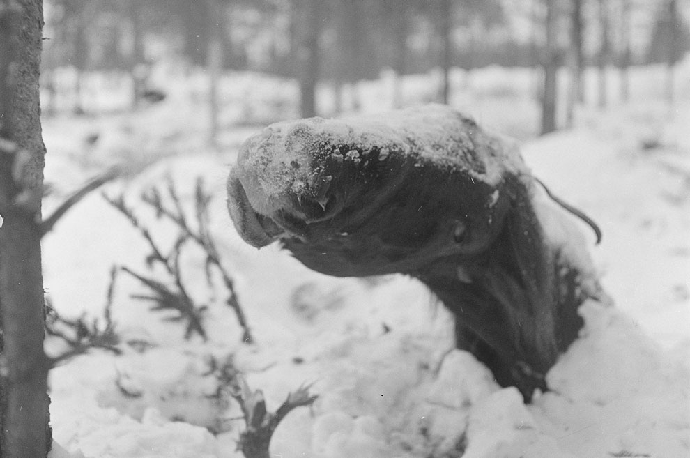 Замерзший конь возле Ruhtinaanmäki
