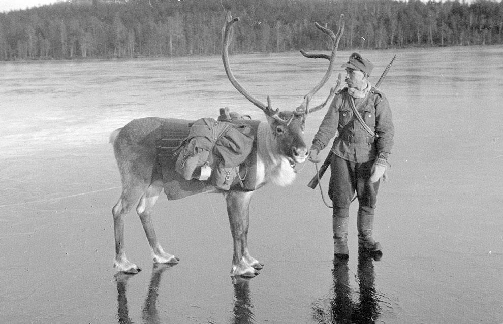 Солдат и северный олень на льду в северной Лапландии, Финляндия