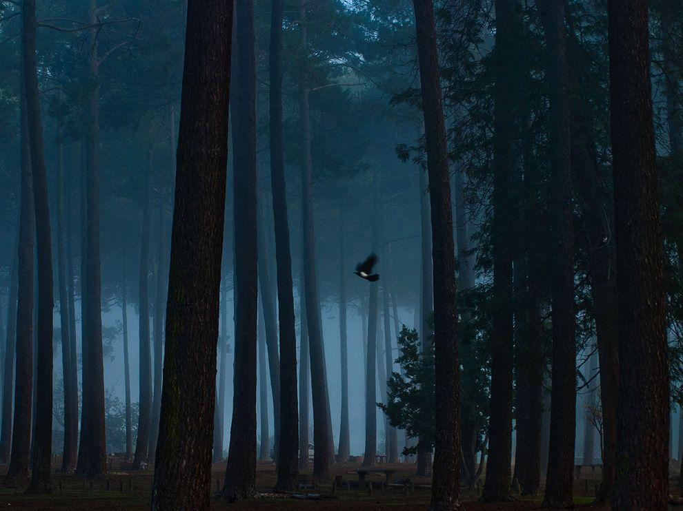Таинственный лес Токай, Южная Африка