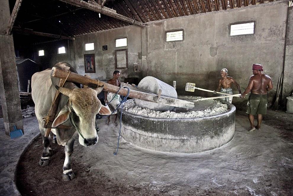 В качестве мукомольного аппарата на фабрике используют огромную чашу, однотонный цилиндр и коров, возящих этот цилиндр по кругу