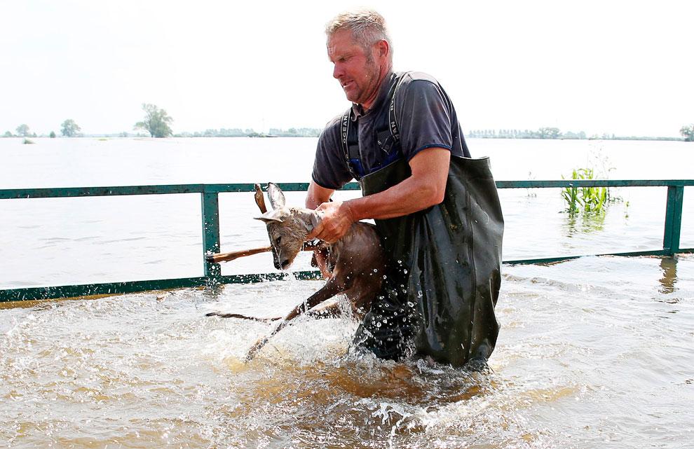 Спасение из воды олененка