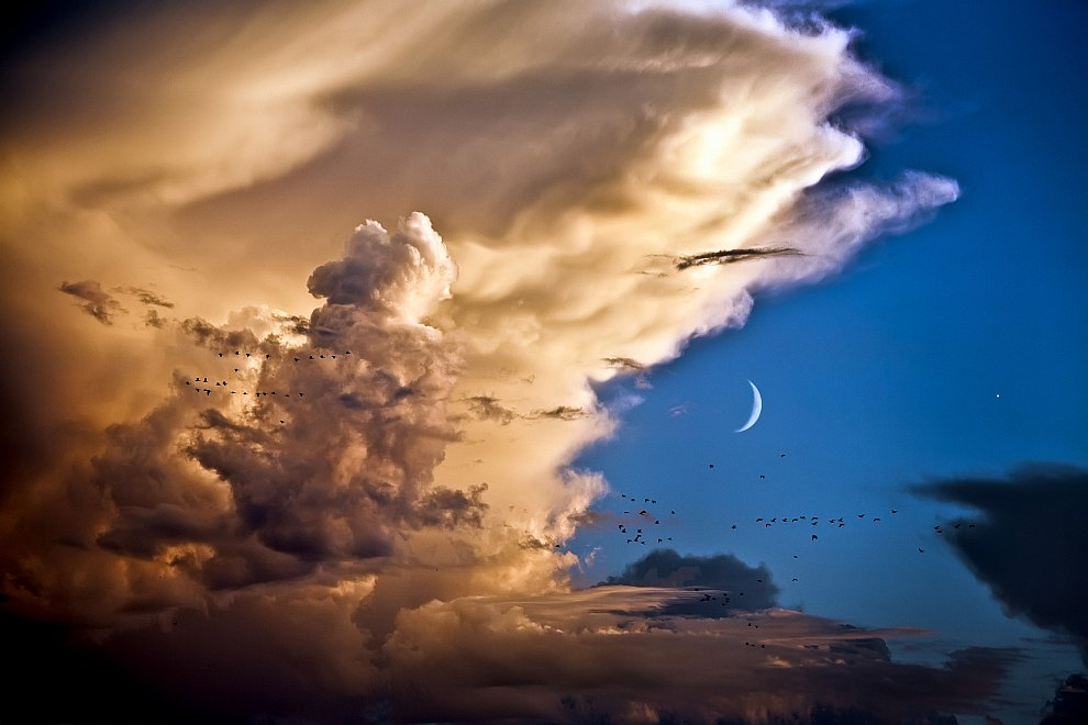 Луна, Венера, облака и птицы