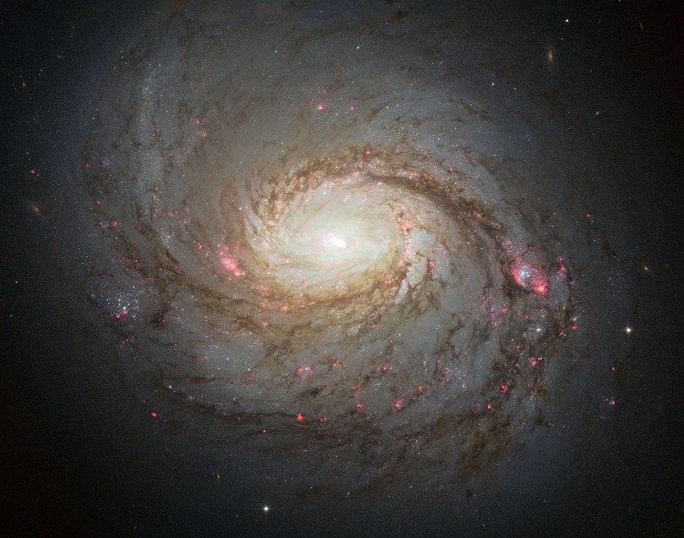 M 77 — галактика в созвездии Кит