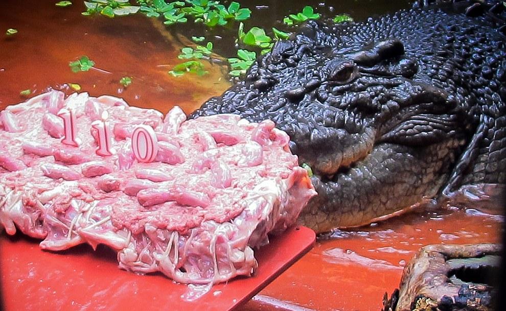 В конце мая австралийскому гиганту-долгожителю Кассиусу Клею подарили 20-килограммовый торт из цыплят на его 110-й день рождения