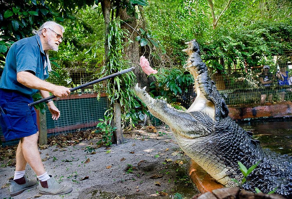В 2011 году крокодила внесли в Книгу рекордов Гиннесса