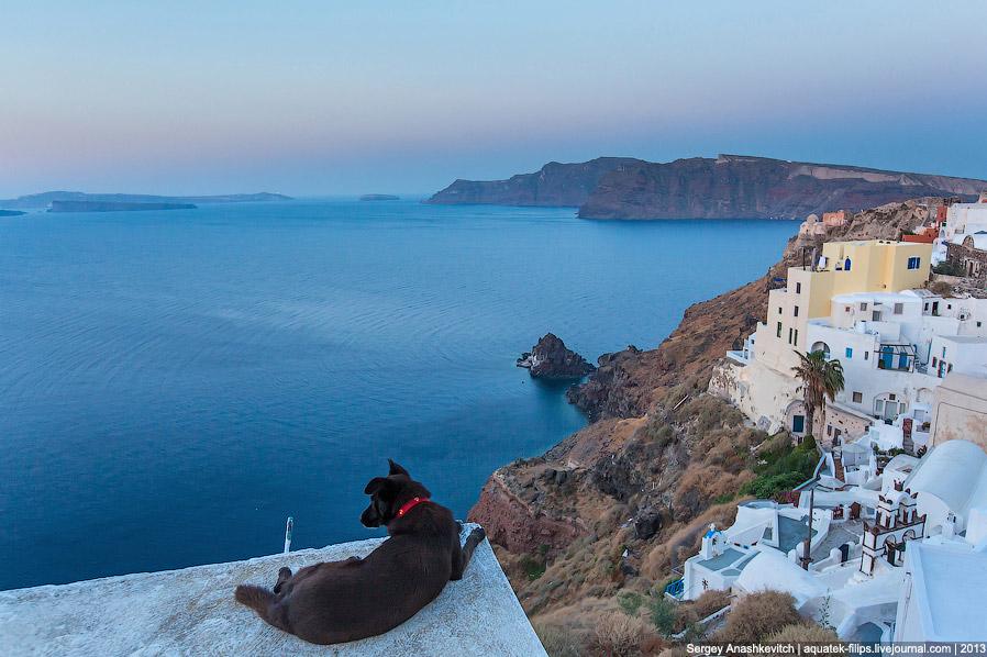 Все собаки попадают в рай: остров Санторини