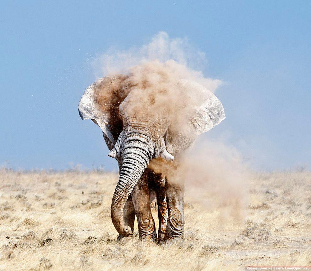 Калахари — пустыня в Южной Африке