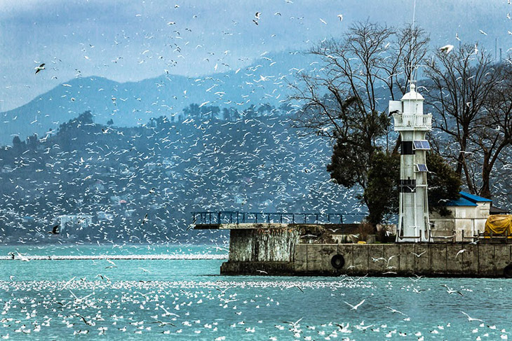 Море чаек над Батуми