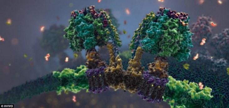 На этой картинке как раз и показан процесс выработки аденозинтрифосфорной кислоты (АТФ)