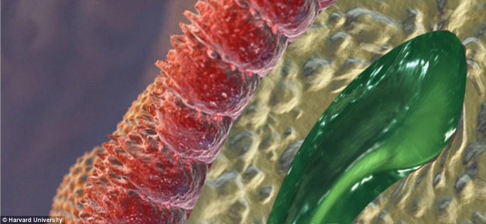Кишечные микроворсинки
