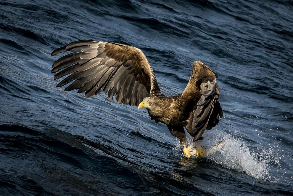 Птица у города Портри в Шотландии