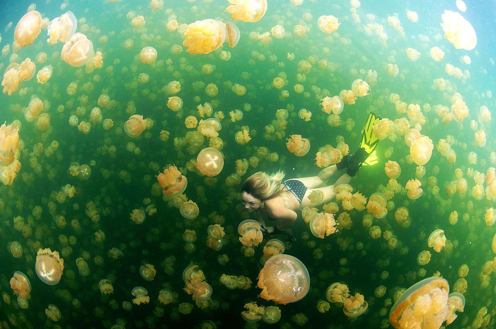 Когда вы плаваете с медузами, это похоже на сказку, Палау