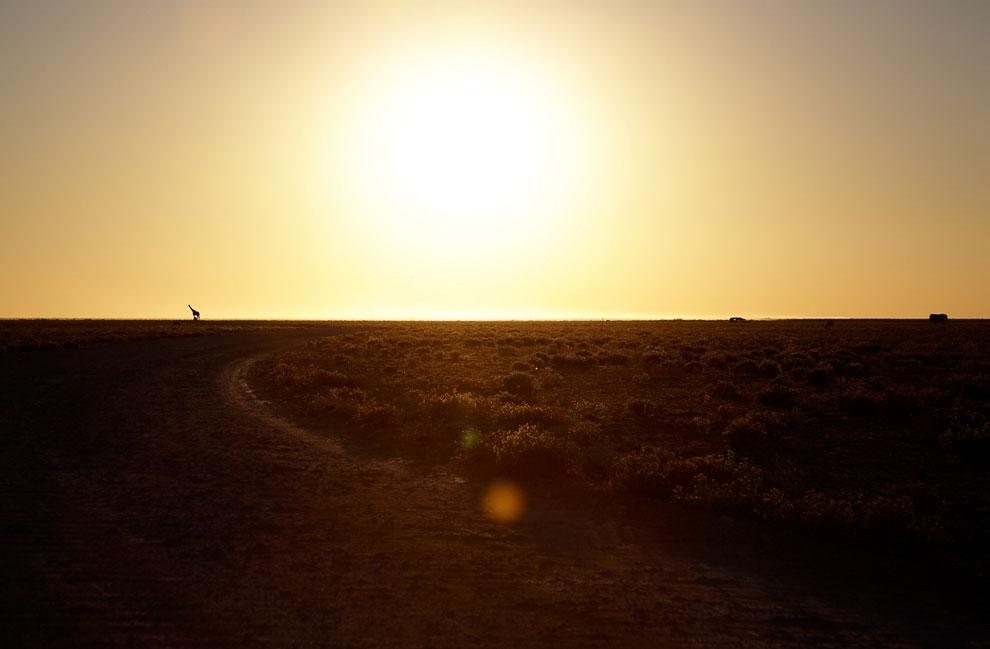 Африка и жираф на горизонте