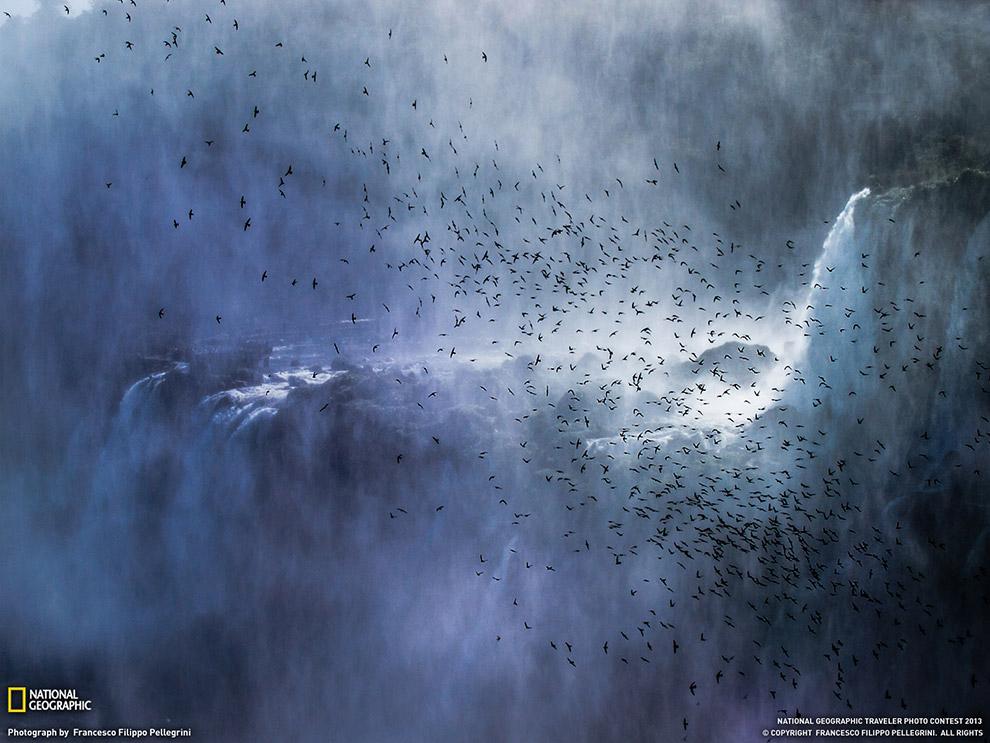 Стая стрижей на водопадов Игуасу