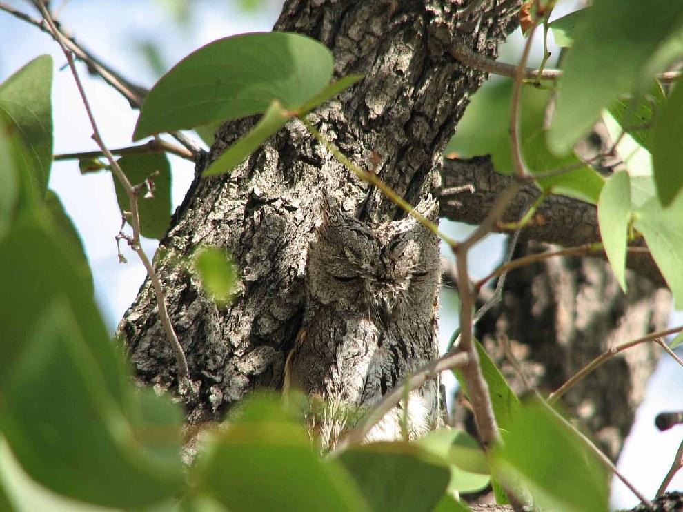 Найди сову