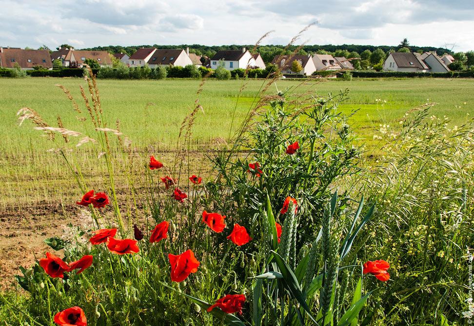 Французское маковое поле