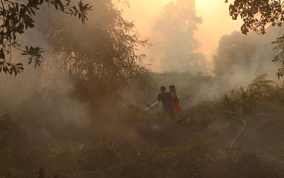 Пожарные пытаются справиться с огнем в лесах Индонезии
