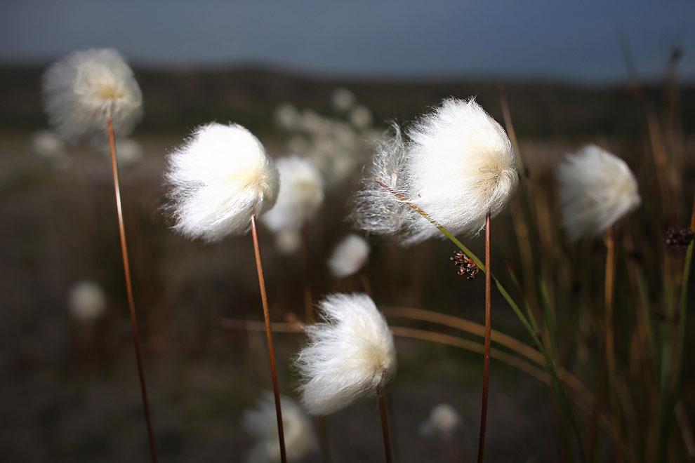 Растительность в Гренландии приурочена к местам, свободным ото льда