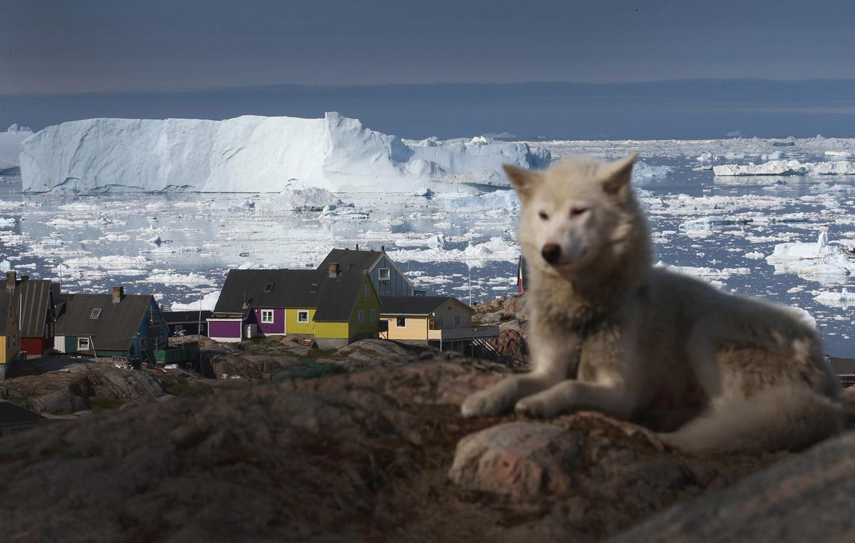Пес на фоне потрясающего пейзажа с айсбергами, город Илулиссат