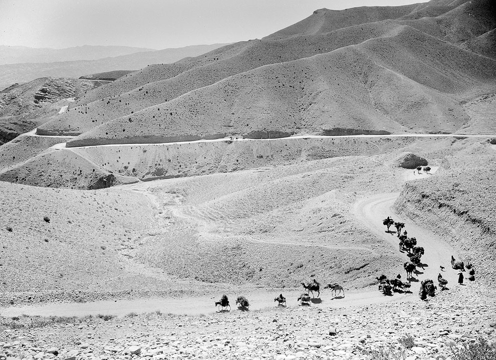 Караван мулов и верблюдов по пути в Кабул