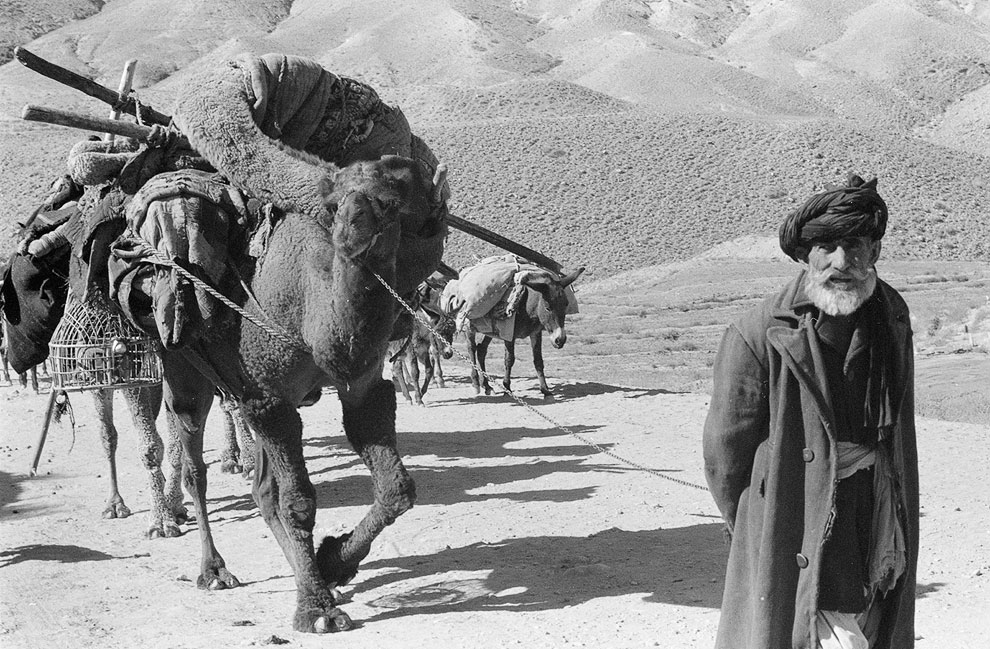 Афганец верблюдами и ослами в горах Афганистана