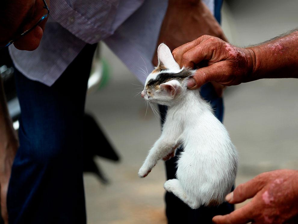 Покупатель выбирает кошку, которую продают на мясо на рынке в Гуанси, Китай