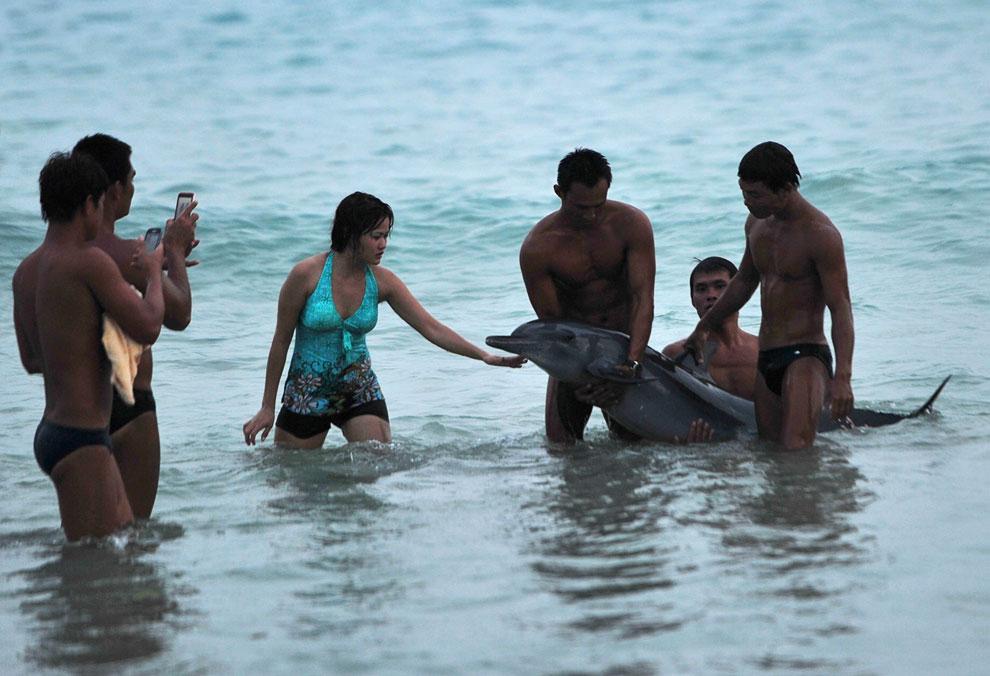 На пляже в провинции Хайнань появился раненый дельфин