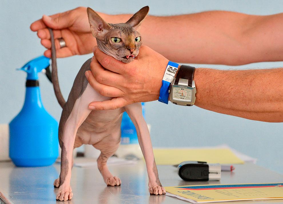 В Эрфурте, Германия прошла международная выставка кошек и собак