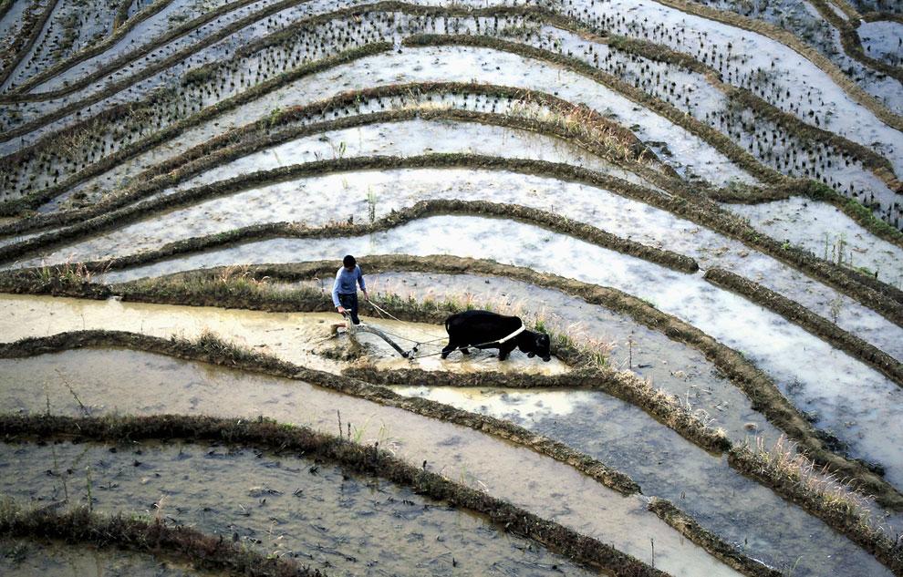 Фермер вспахивает террасы в провинции Цзянси