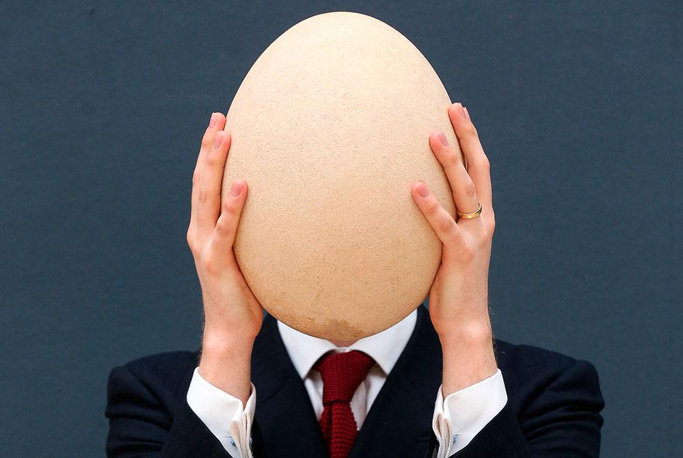 Международный аукционный дом «Кристис» продал 24 апреля 2013 гигантское яйцо давно вымершей слоновой птицы
